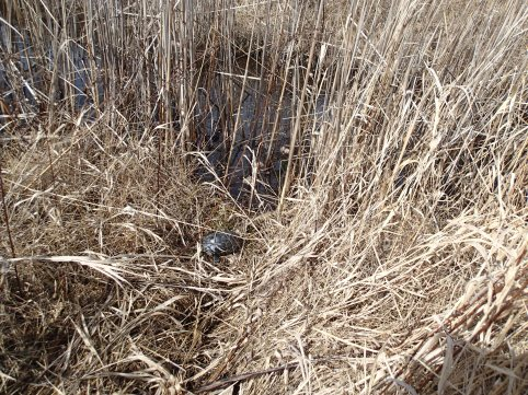 Tracked turtle in vegetation