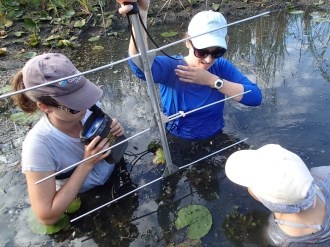 It's tricky business radio tracking turtles in the deep part of the pond