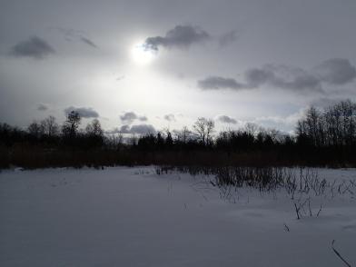 Cold field site